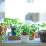 観葉植物は難しくない!種類、育て方、ギフト用のまとめ