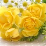 父の日に贈る花 お父さんのイメージ&花言葉から選んでみよう