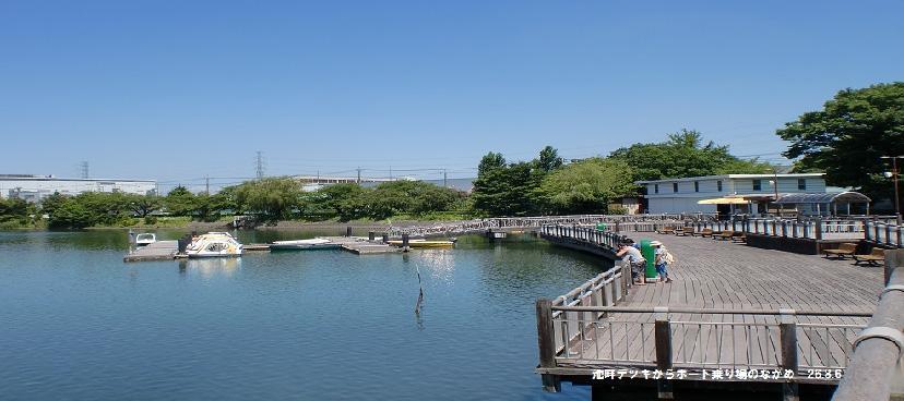 埼玉県営久喜菖蒲公園へ花しょうぶレンタル移籍