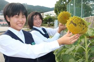 長崎県佐世保市 ヒマワリの種育て福島復興支援