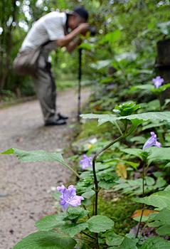 京都府京都府立植物園 秋の花が早くも咲く!異常気象の影響か?