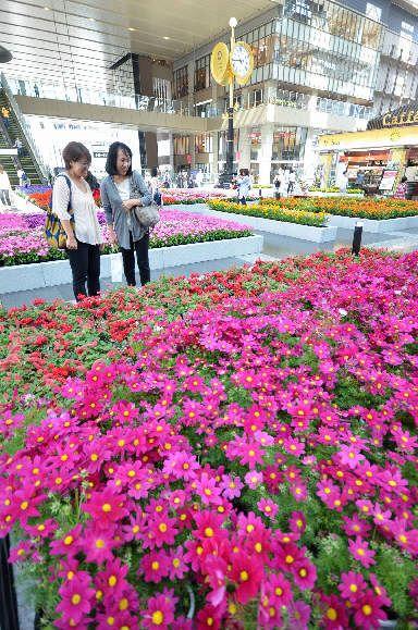 大阪府 大阪駅に花畑出現 40種2万ポット彩る